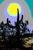 Thumbnail Arizona Cactus abstract 2