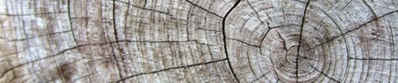 Thumbnail Wood Grain on tree limb, web banner