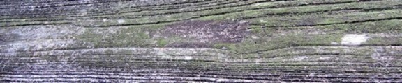 Thumbnail Mossy Wooden Plank, web banner photo