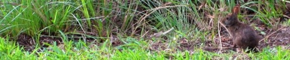 Thumbnail Bunny in the grass, web site banner photo