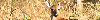 Thumbnail Deer near Austin, TX, web banner photo