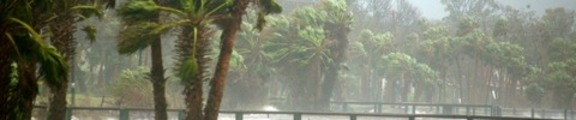 Thumbnail Rain and Trees, Hurricane Jeanne, web banner photo