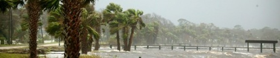 Rain and Trees, Hurricane Jeanne, web banner photo