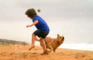 Thumbnail A boy plays with his dog on the beach