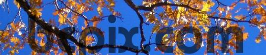 Product picture Yellow fall leaves on branches, web banner photo